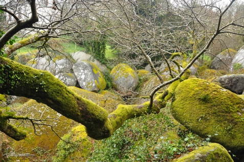 The moss permeates everything in this forest located in Huelgoat, France.