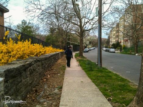 """Dog walking """"path""""."""