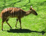 042105_Bronx_Zoo31
