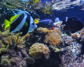 20090708_Aquarium04