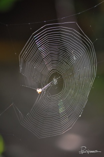The most beautiful pattern of all in nature: a spider's web.