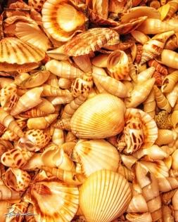 Seashells seashells by the seashore.