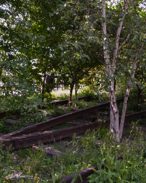 20130810_The_High_Line34-2