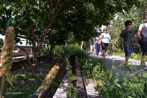 20130810_The_High_Line37